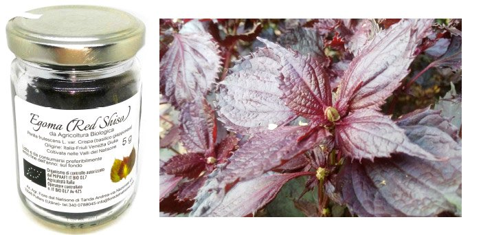 2 red shiso