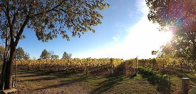 banner Folicello azienda agricola vini bio